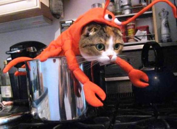 15-hilarious-cats-in-costumes-lobster-cat